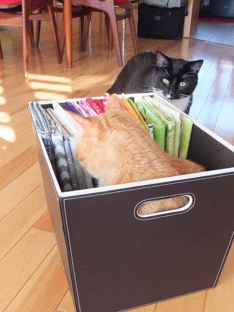 Felix and Tiberius helping organize fabric