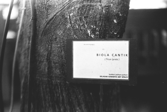 Biola Cantik (Beautiful Violin)