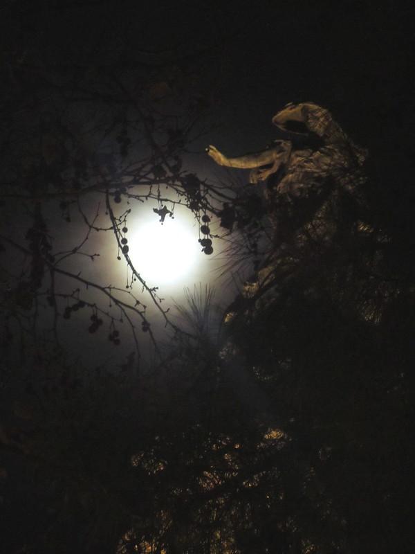 Sube la Luna
