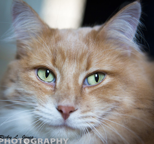 Cat Eyes by Ricky L. Jones Photography