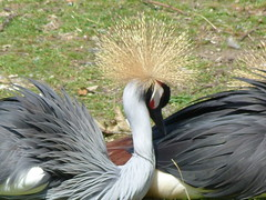 echidna(0.0), pelican(0.0), animal(1.0), water bird(1.0), wing(1.0), fauna(1.0), beak(1.0), crane-like bird(1.0), crane(1.0), bird(1.0), wildlife(1.0),