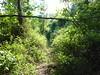 Sentier perdu des bergeries de Mela repris par les ronces en Haut-Cavu