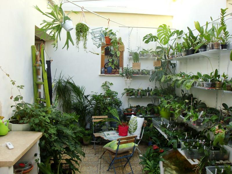 Dans mon Jardin d'Hiver 8429401455_e0410dcd5d_c