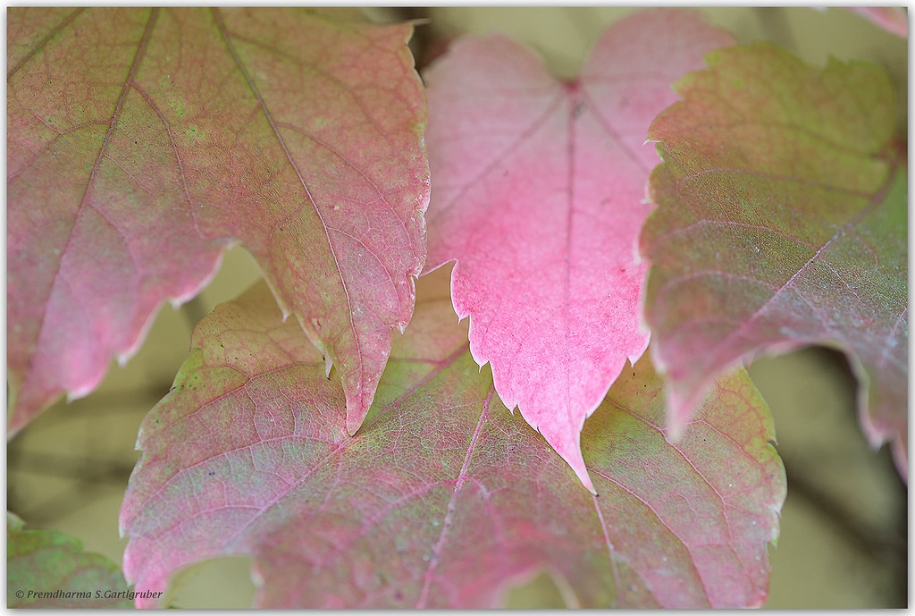 Leaves in autumnal colours