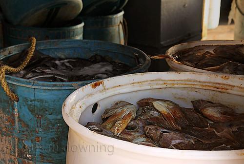 Bait Fish