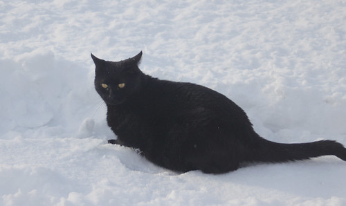 Black Cat White Snow