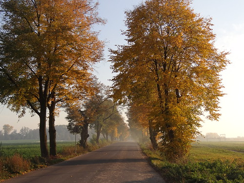 road autumn trees sun fall nature yellow gold golden countryside alley colours poland polska sunny avenue tubądzin