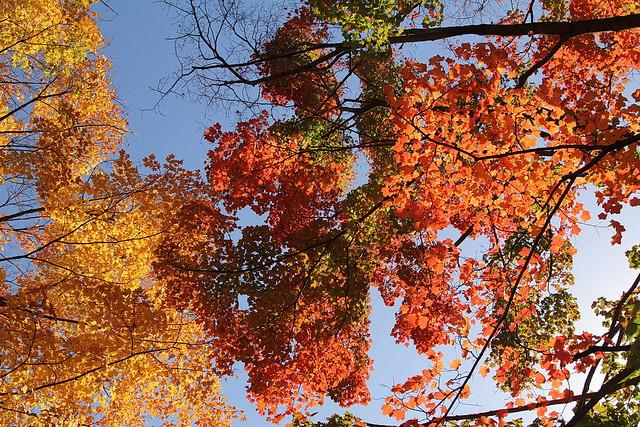 Frescoes in the Autumn Sky. Photograph by Anna Azarova, 2012. BBG Class: Advanced Photography in the Garden.