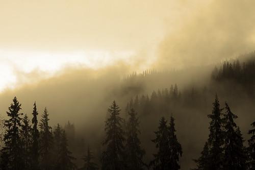 trees fog clouds canon romania canonef2470mmf28lusm moldova bucovina suceava canoneos50d canon50d campulungmoldovenesc