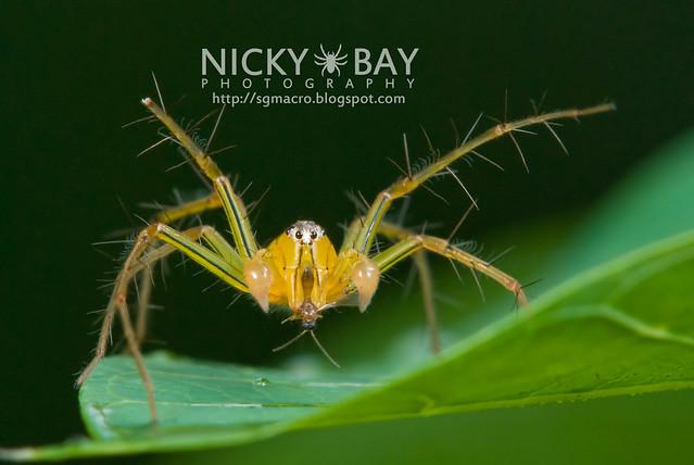 Lynx Spider (Oxyopidae) - DSC_8014