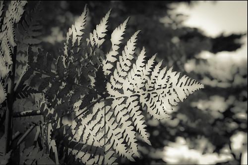sculpture macro closeup newyorkbotanicalgarden manolovaldés bronzeandsteel blackwhitepassionaward