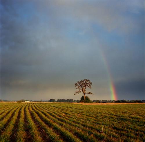 sunset storm color tree film field oregon analog landscape rainbow hasselblad pacificnorthwest sauvieisland stormlight hasselblad500c bluemooncamera morganlanding canyoutellihavebeenreadingtoomuchiainbanks