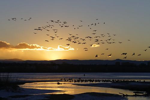 sunset usa nature canon geese colorado wildlife aurora urbannature urbanwildlife dxo canadageese allrightsreserved cherrycreekstatepark ef70200mmf4lis pixelpeeper canon7d birderupload 01012013 dxoopticspro81 copyright2013davidcstephens mg4561dxo upload01032013