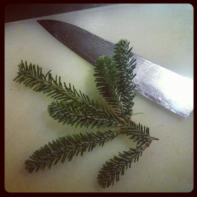 Eating the Christmas Tree... Christmas Tree (Fir) Brined Pork Tenderloin Pork
