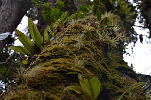musgo y epifitas