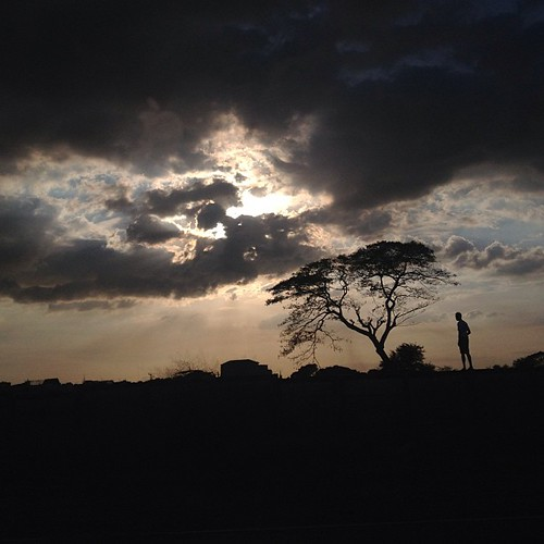 sky tree silhouette dark square landscape squareformat drivebyshooting iphoneography instagramapp uploaded:by=instagram foursquare:venue=502e37e8e4b0b02593e05b75