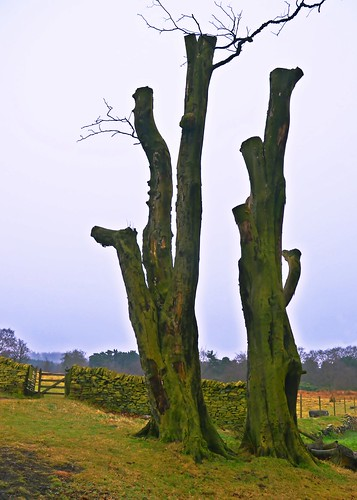 Longshaw Estate 2 by birbee