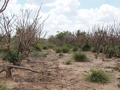 The Great Ruaha River is completely dry for three months at a stretch. Credit: Thomas Kruchem/IPS