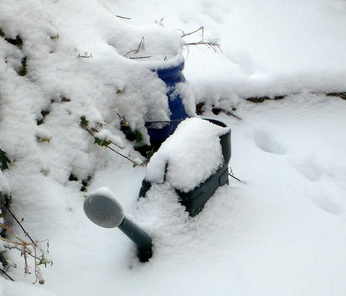 Watering Can in The Snow