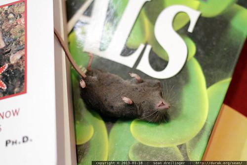 cats left rachel a dead mouse     MG 1766