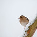 Mrs Chaffinch having a hard day at the office by PogiPete