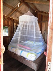furniture, mosquito net, bed,