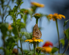 Add Another Butterfly Photo
