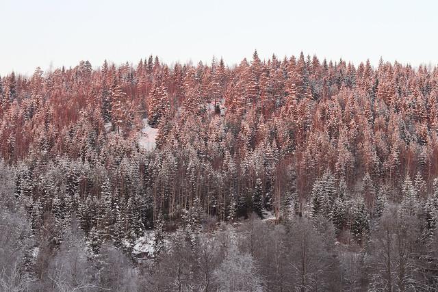 hejregina.blogspot.com skogen