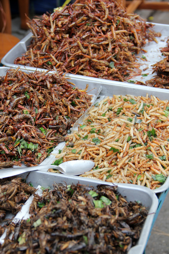 8262512757 5bbe128dc3 o How to Eat Scary Insects, Worms, and Bugs in Thailand