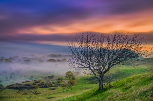 california morning autumn trees usa sun green grass fog clouds sunrise landscape golden pentax hiking trails hills bayarea eastbay antioch k5 ebrpd contracostacounty eastbayregionalparkdistrict contraloma tamron1750 ebparks ilikethenight marccrumpler ebparksok pentaxk5 water14