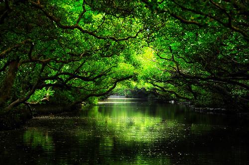 台南。四草綠色隧道 - 無料写真検索fotoq