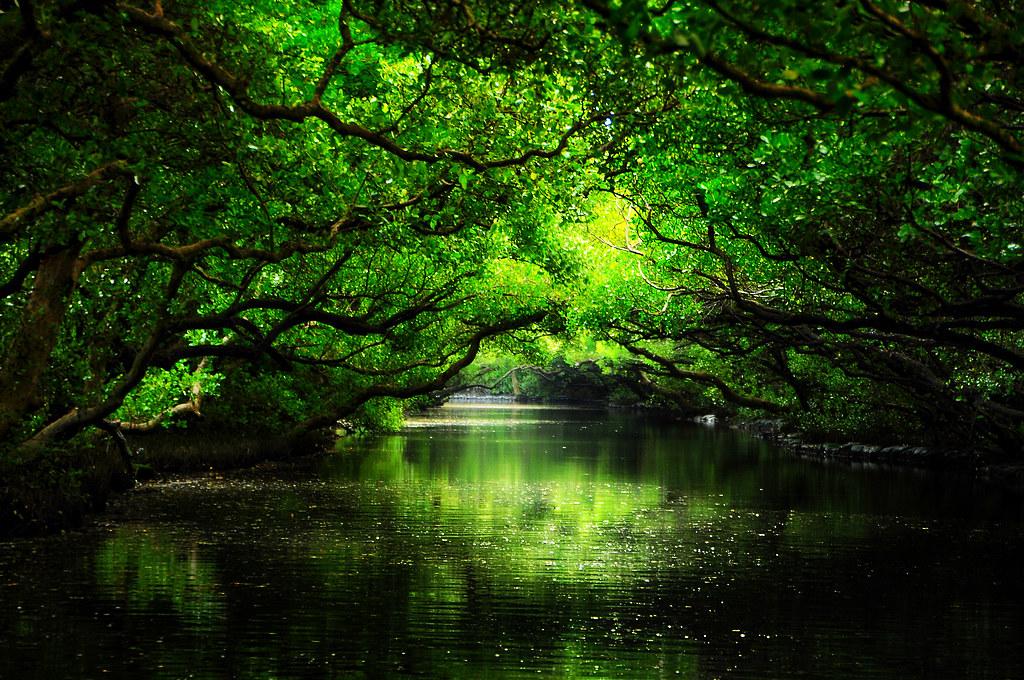 台南。四草綠色隧道