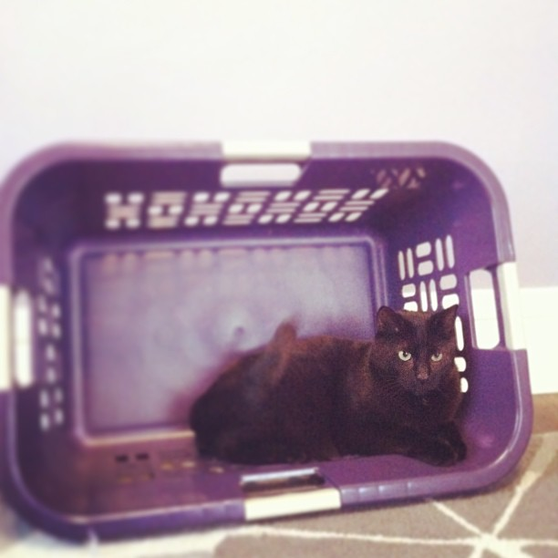 He loves that basket!  Hopefully by tonight I will have my new iPhone 5 => better pictures!