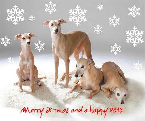 Weihnachten 2012Monique