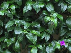 vegetable(0.0), produce(0.0), gardenia(0.0), food(0.0), flower(1.0), leaf(1.0), plant(1.0), herb(1.0), basil(1.0),