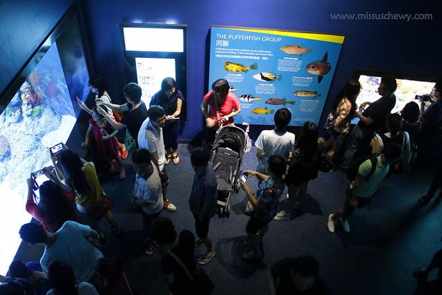 RWS S.E.A Aquarium 530
