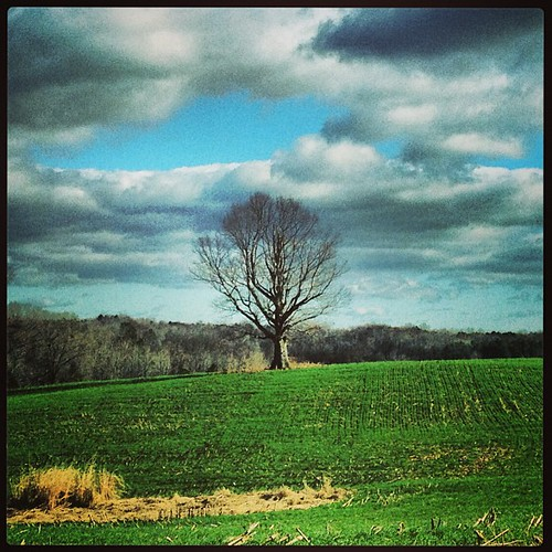 old trees nature overgrown beautiful beauty nc farm northcarolina historic 1950 agricultural 1930 farmlife southernlife confederatesouth instagramappsquaresquareformatiphoneographyuploadedbyinstagramfoursquarevenue4cd888a01891236a00c8360boxford