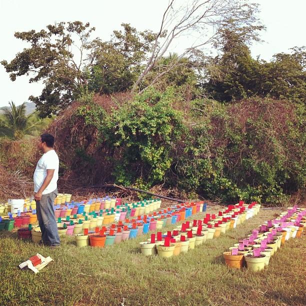 planting (01dec).