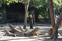 Ostrov Komodo: Výlet za komodskými draky