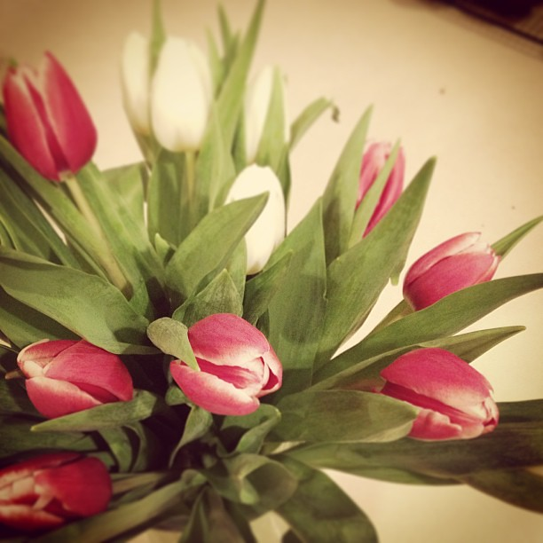 Grocery Stores are Packed Due to Winter Advisory & This is What I Bought #tulips #beatthewinterblues