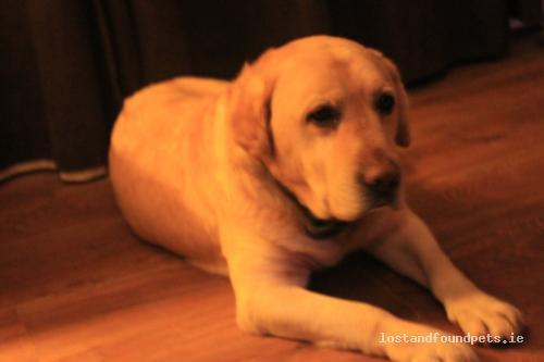 Thu, Jan 10th, 2013 Found Male Dog - Moone, Glebe, Kildare