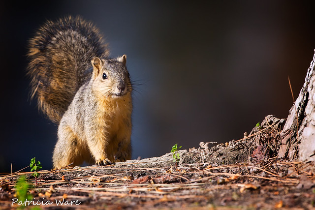 Squirrel Greeter