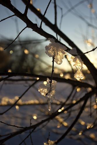 winter light usa snow cold ice sunrise canon virginia bokeh roanoke icicle canon550d