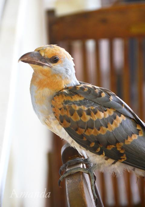 bird_6676 e