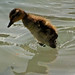 Small photo of Walk on Water