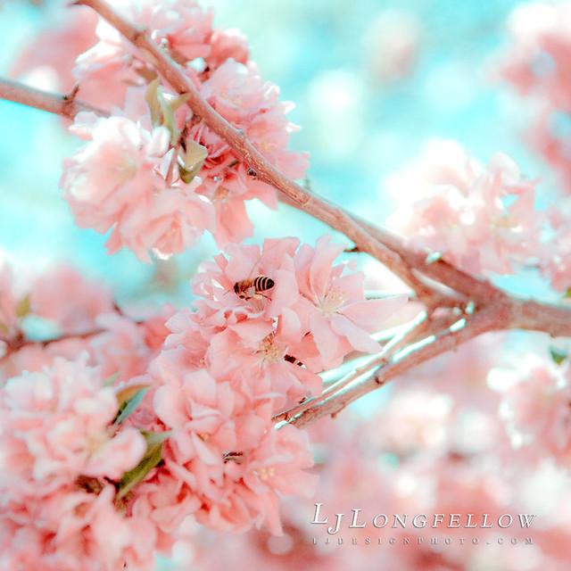 Pink Spring 34/365