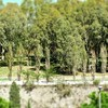 #trees #alberi #landscape #panorama