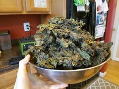 Kale Chip Fiesta