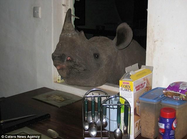 rinoceronte4-diarioecologia