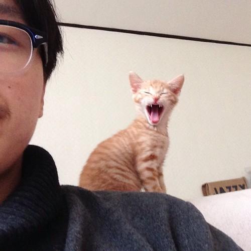 어느덧 사진첩에는 볼프사진이 많아졌네! 정글의왕자 볼프의 표효! #wolf #cat
